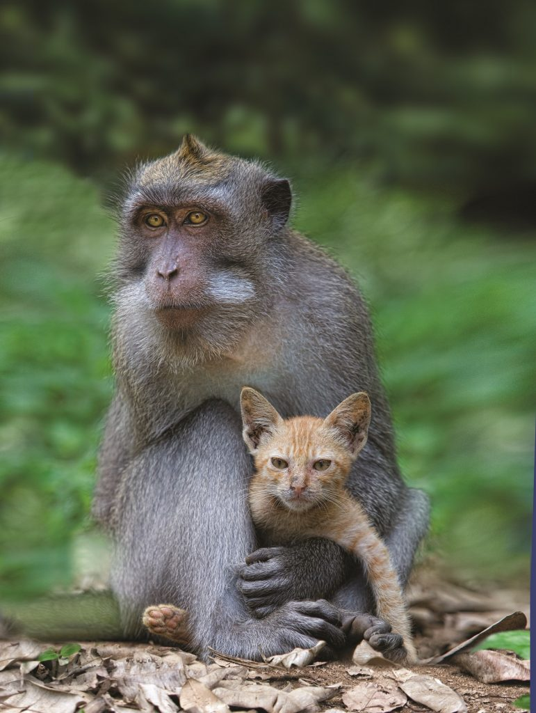 25 The Macaque and the Cat Anne Young